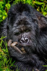 фото 29: Премия комедийной фотографии дикой природы - 2020