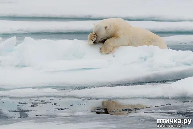 фото 11: Премия комедийной фотографии дикой природы - 2020