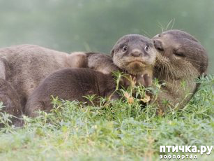 фото 32: Премия комедийной фотографии дикой природы - 2020