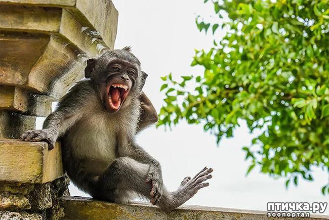 фото 39: Премия комедийной фотографии дикой природы - 2020