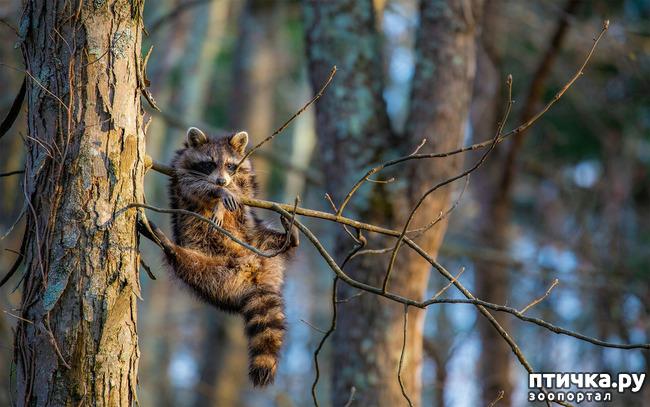 фото 37: Премия комедийной фотографии дикой природы - 2020