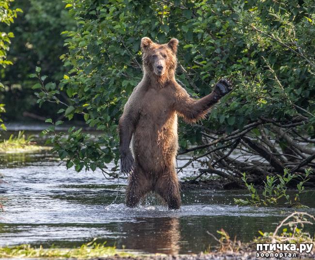 фото 35: Премия комедийной фотографии дикой природы - 2020