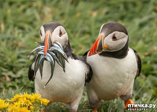 фото 33: Премия комедийной фотографии дикой природы - 2020