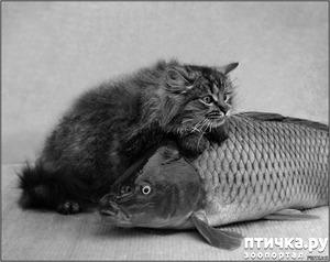 фото: Рыбы против кошек