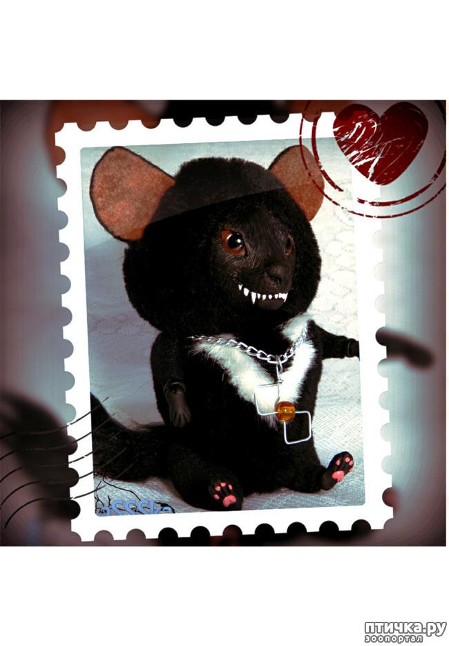 фото 1: Тасманский дьявол 2