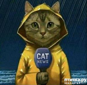 фото: Cat news