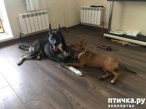 фото: Установка контакта с собакой