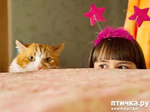 фото: Почему у кошки случается стресс и что с этим делать