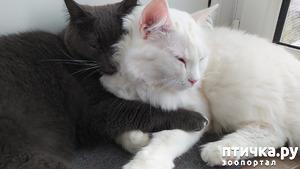 фото: Как коты по мне скучали