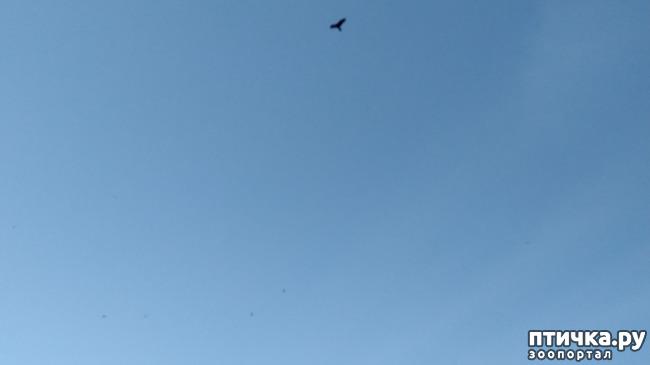 фото 5: Стрижи прилетели