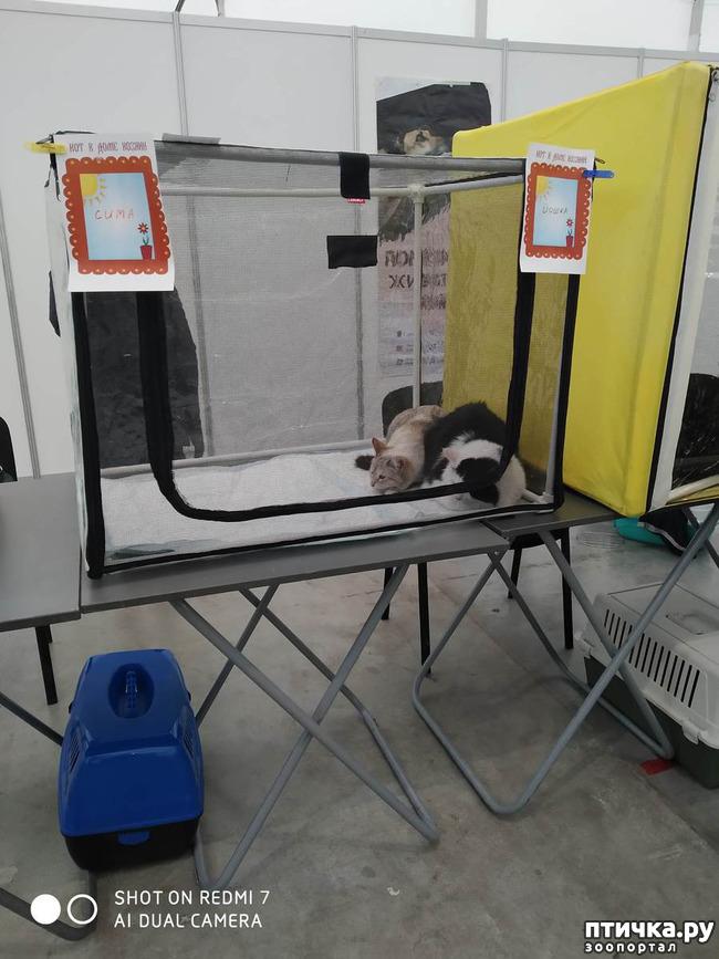фото 16: Зарисовки с собачьей выставки.