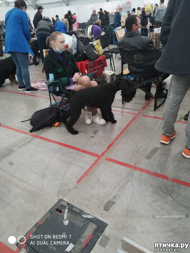 фото 9: Зарисовки с собачьей выставки.