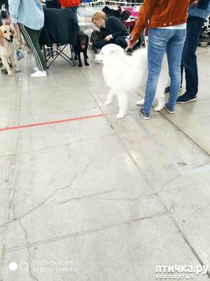 фото: Зарисовки с собачьей выставки.