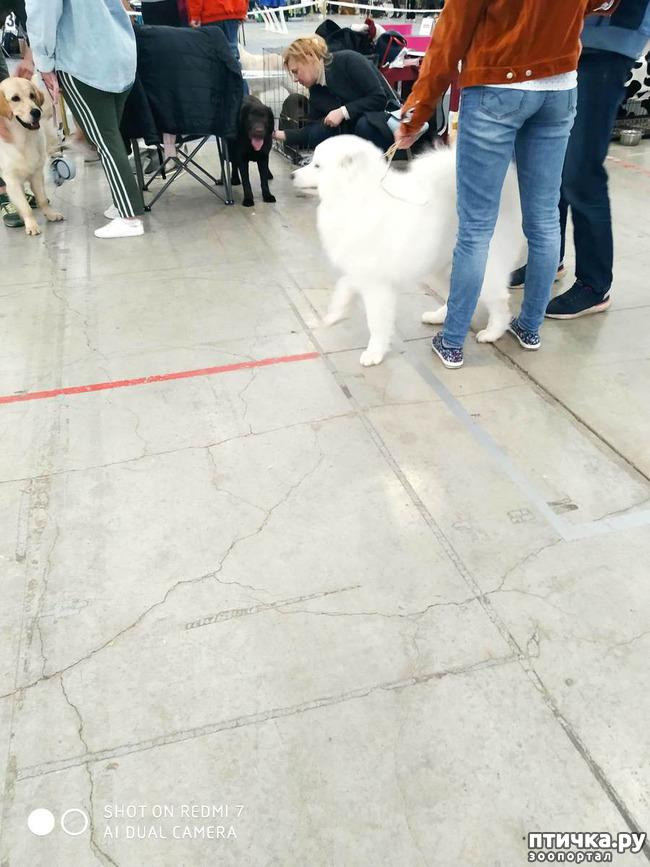 фото 1: Зарисовки с собачьей выставки.