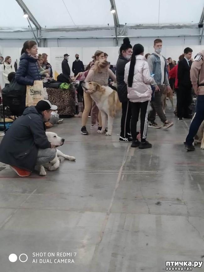 фото 13: Зарисовки с собачьей выставки.
