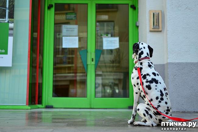 фото 2: Почему не стоит оставлять собаку у магазина одну?
