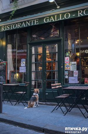 фото: Почему не стоит оставлять собаку у магазина одну?
