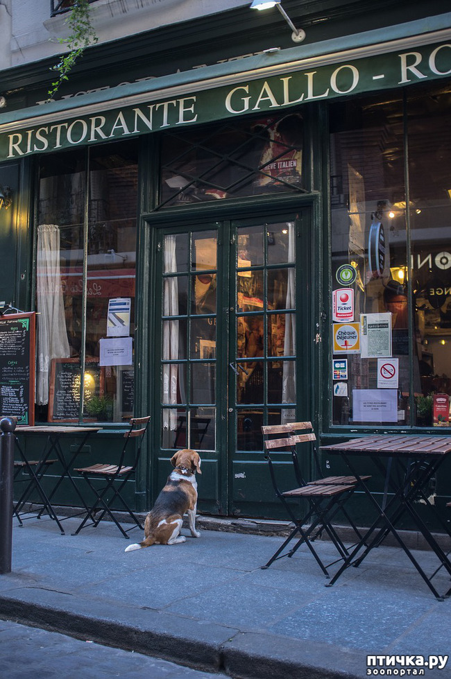 фото 1: Почему не стоит оставлять собаку у магазина одну?