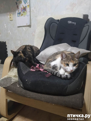 фото: Кошачьи зарисовки