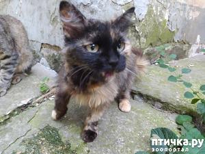 фото: Стерилизация кошки