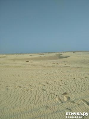 фото: Тунис. Сахара.