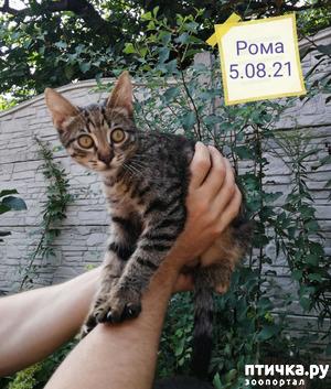 фото: Котик Ромка уехал в новый дом!