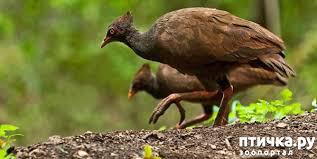 фото 1: Что за птица? Сорная курица.