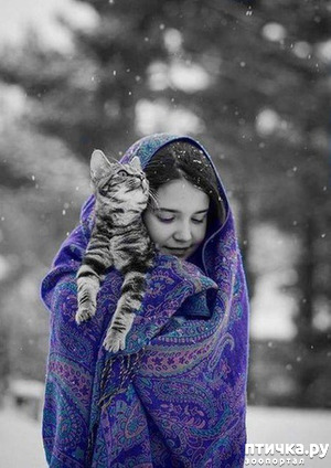 фото: Кошки, кошки, кошки...