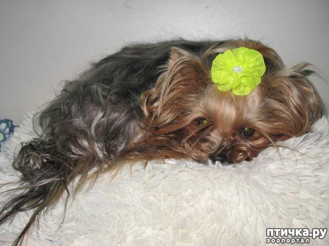 фото 10: Новости беременных собачек.