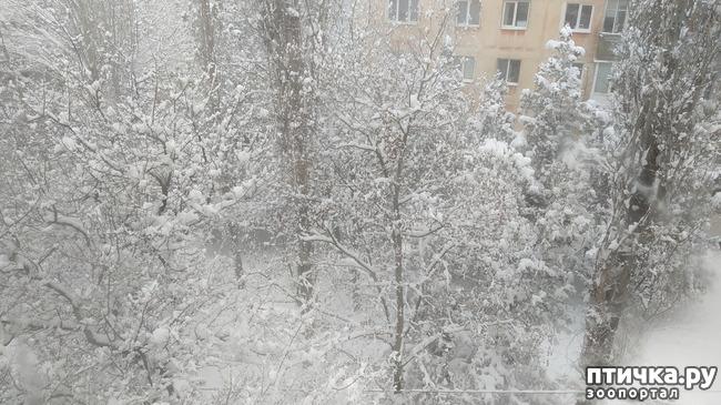 фото 4: Вид из окна