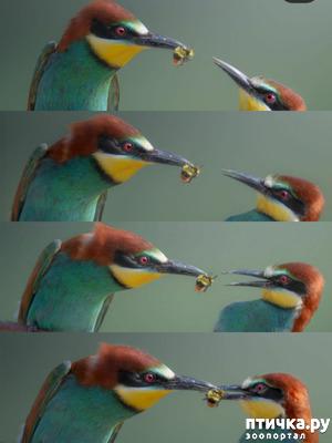 """фото: От птичек - """"птичкам""""!"""