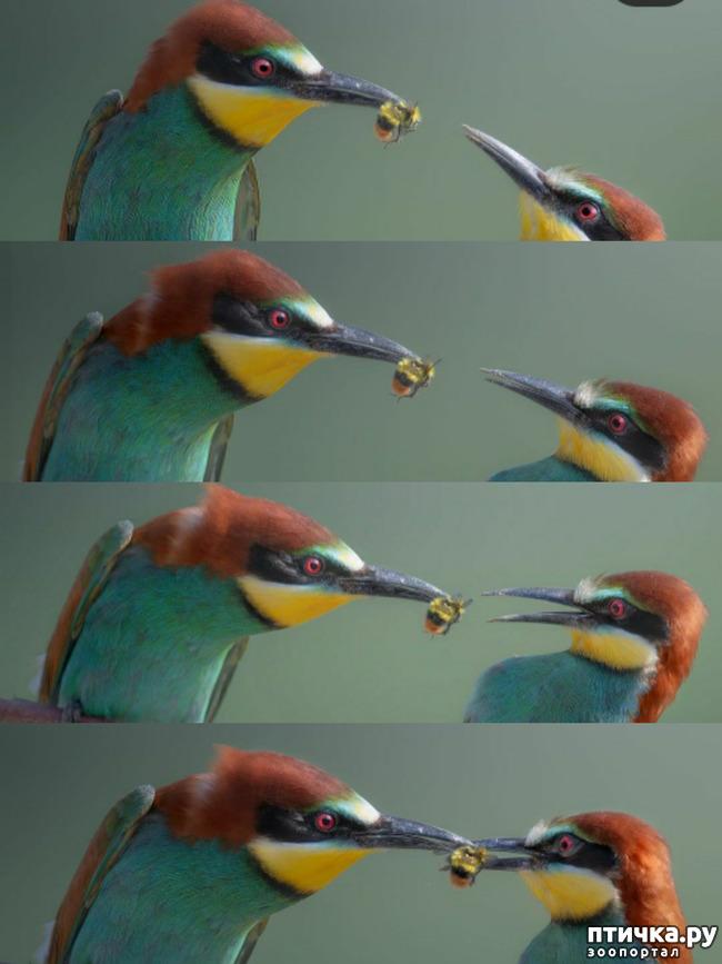 фото 1: От птичек -