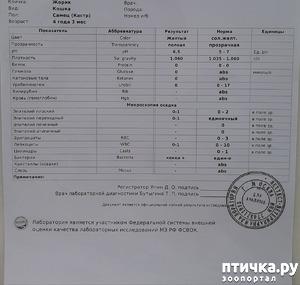 фото: Результат анализа Жорика