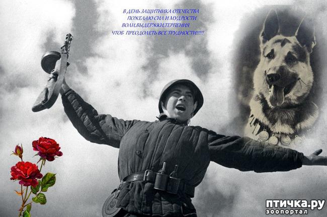 фото 1: Дню Защитника посвящается
