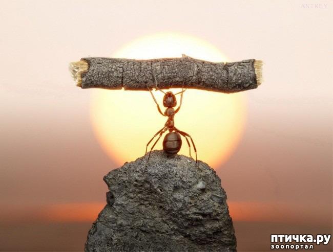 фото 1: Вот что значит верить в себя и свои силы!