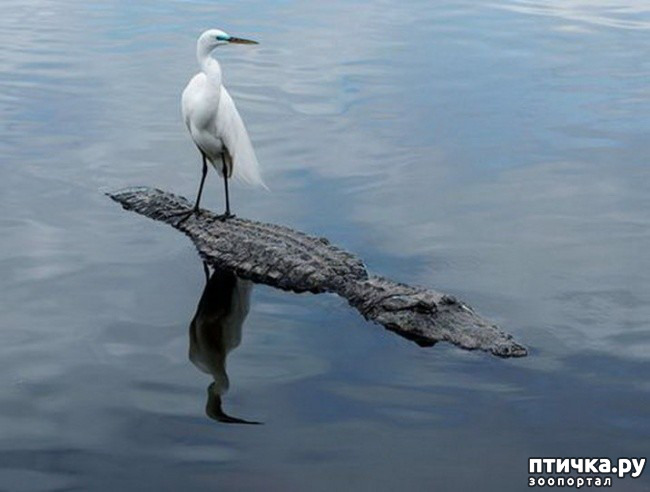 фото 4: Вот что значит верить в себя и свои силы!