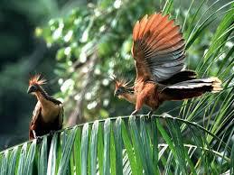 фото: Птица с когтями на крыльях.