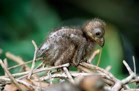 фото 5: Птица с когтями на крыльях.