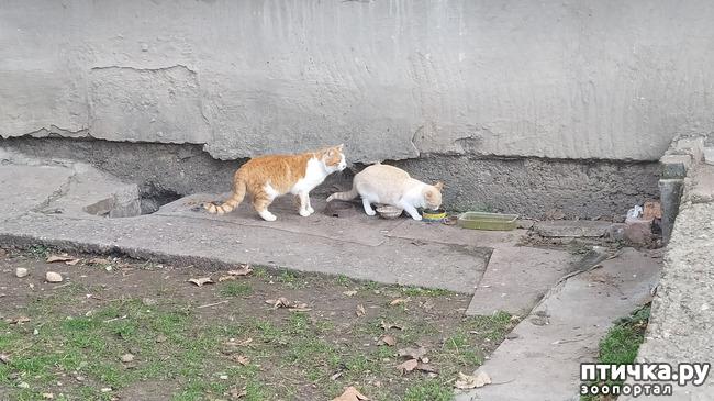фото 4: И для кошек бывает Рождество