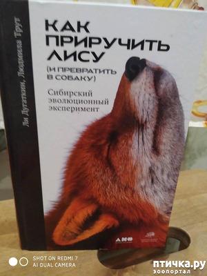 """фото: """"Как приручить лису (и превратить в собаку)"""""""