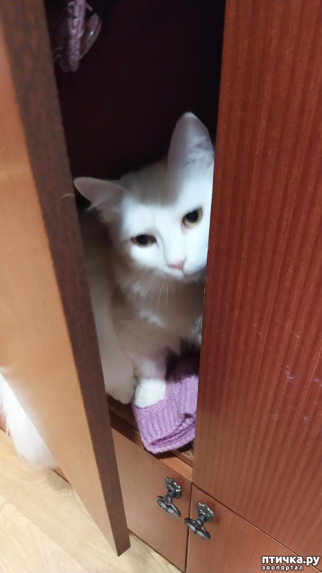 фото 1: Я спрятался!