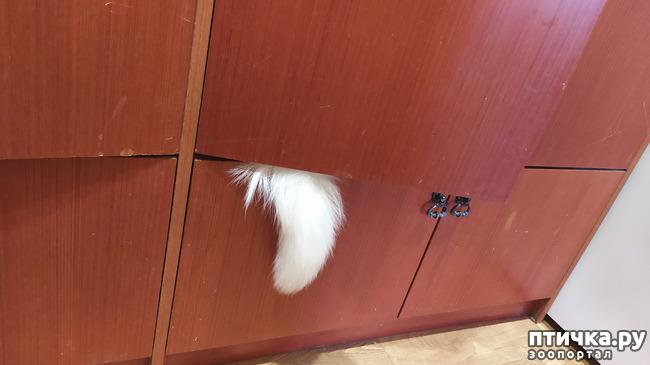 фото 2: Я спрятался!