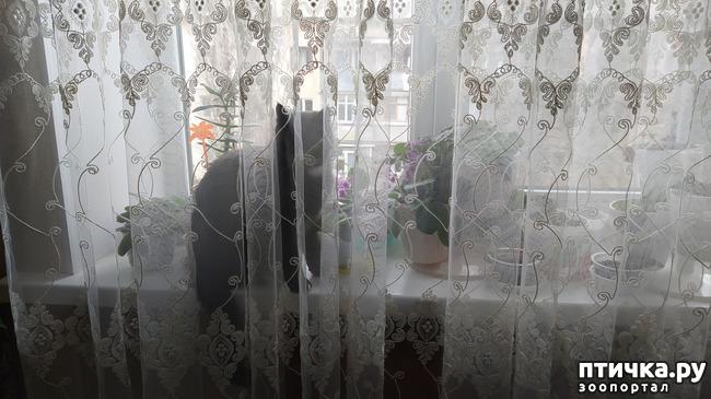 фото 6: Я спрятался!