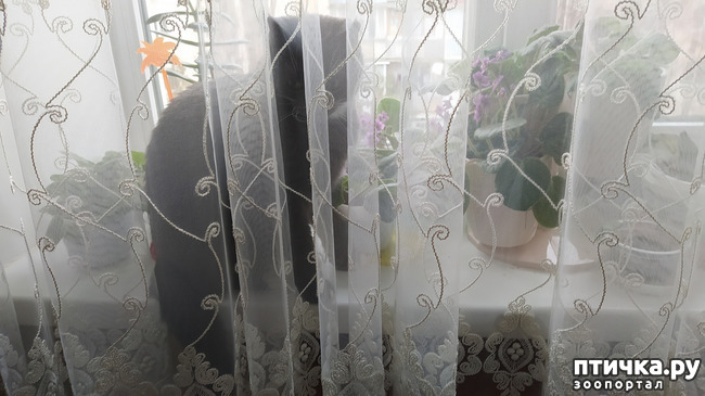 фото 7: Я спрятался!