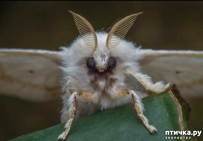 фото 4: Микроужас или красота симметрии!
