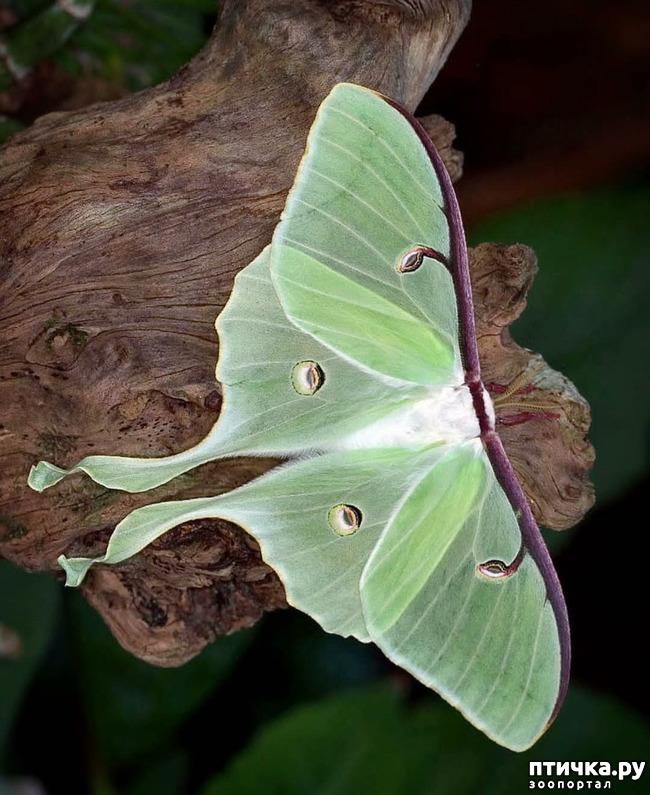 фото 3: Микроужас или красота симметрии!