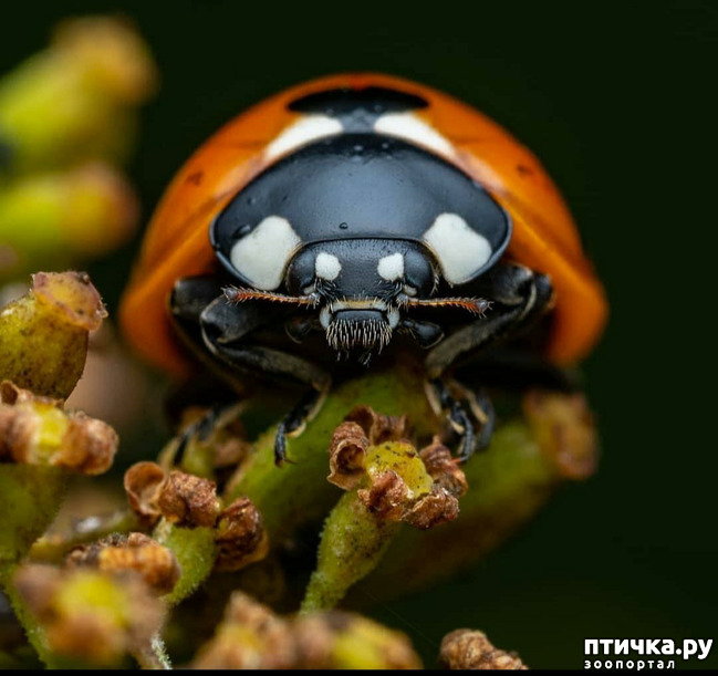 фото 7: Микроужас или красота симметрии!