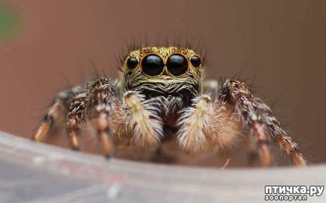фото 10: Микроужас или красота симметрии!
