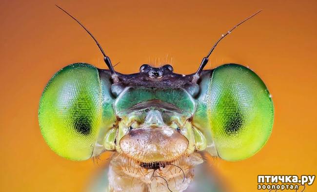 фото 2: Микроужас или красота симметрии!