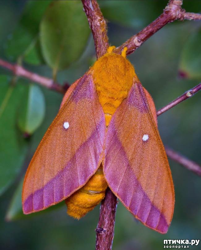 фото 6: Микроужас или красота симметрии!
